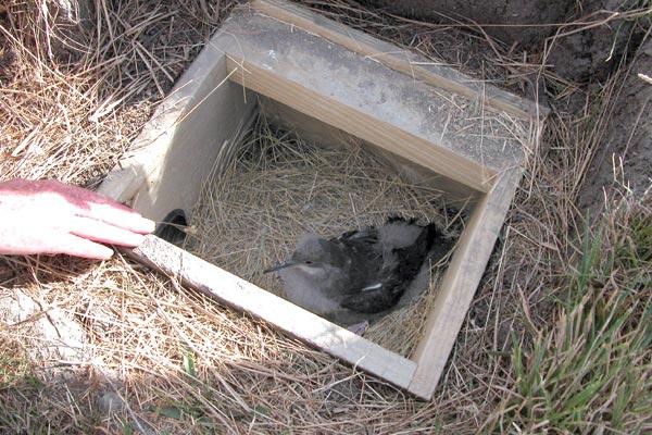 bird-in-box